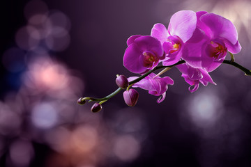 Tuinposter Orchidee orchid flower on a blurred purple background. valentine greeting card. love and passion concept. beautiful romantic floral composition.
