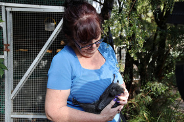 Janine Davies, who set up Shoalhaven Bat Clinic, a care centre for flying foxes, in her home, holds a grey-headed flying fox in Bomaderry