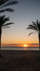 Tuinposter Centraal-Amerika Landen The silhouette of palm trees and a beautiful sunrise in the Mediterranean sea in the coastal town of Cullera, which is located in the community of Valencia, in Spain, Europe