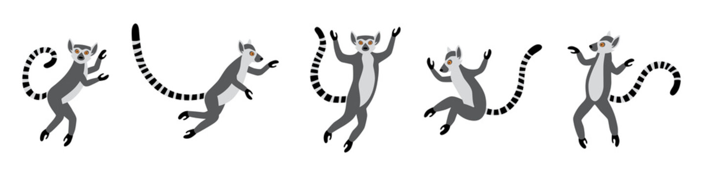 Cute funny ring-tailed lemurs jumps. Exotic Lemur catta. Set of vector illustrations in cartoon and flat style isolated on white background