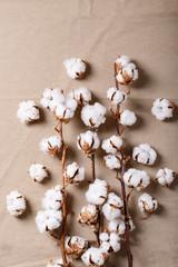 Dry cotton flower