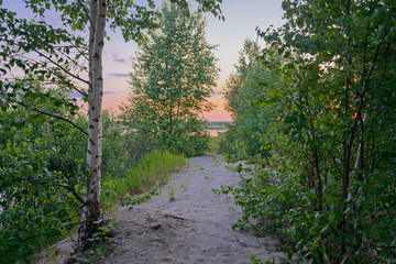 Sandy path through thickets of bushes and trees to the lake at sunset day