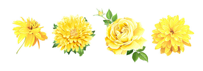 Set of beautiful realistic yellow flowers. Rose, Aster, of Rudbeckia Laciniata isolated on a white background. Template for floral design