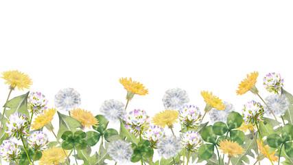 野の花 タンポポとクローバー