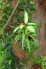 Plante verte dans un pot en noix de coco