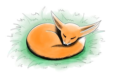 Fototapete - red fox sleeping in a green grass isolated on white