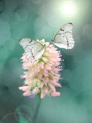 A beautiful delicate butterfly in the glow of light on a pastel background.