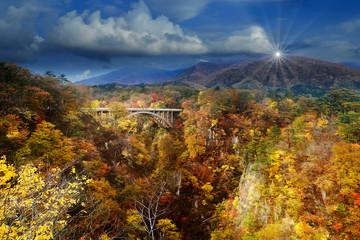 Naruko Gorge beautiful maple leaves in autumn