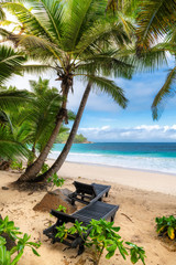 Fototapete - Sunny beach with palm trees and beach chairs and turquoise sea in Jamaica Caribbean island.