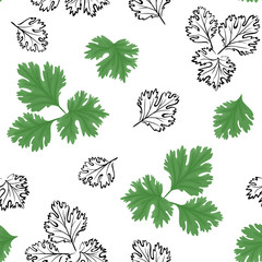 Cilantro seamless pattern. Vector color illustration of green herbs on a white background. Black and white outline.