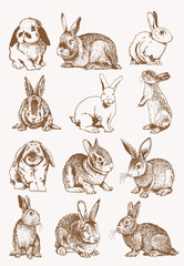Graphical set of bunnies , sepia background, vector illustration, Easter bunny