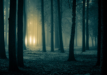 Fotobehang Noord Europa A spooky scenery of a trees. Halloween themed landscape. Foggy morning during the first snow.