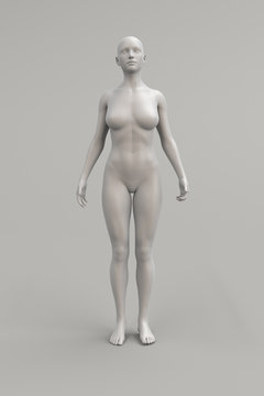 Female body anatomical illustration over a light background. 3D render.