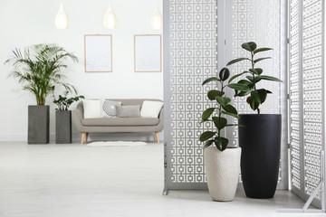 Fototapeta Beautiful potted plants in modern living room obraz