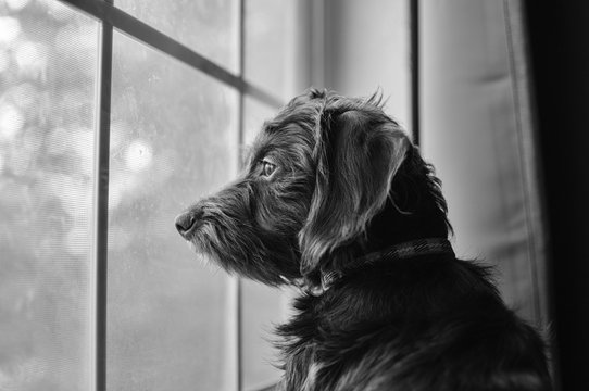 Black dog watching out of a glass window under sunlight with a blurry background