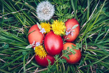 Red easter eggs on the grass with flowers and blowballs, naturally colored easter eggs with onion...