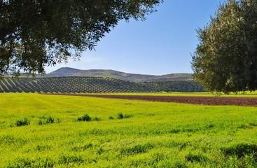 Papiers peints Brun profond paysage printanier, oliveraie