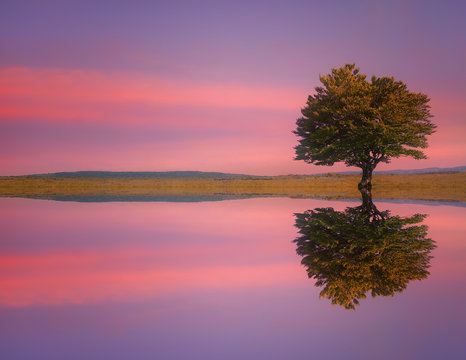 lonely tree on meadow with lake water reflections at sunset