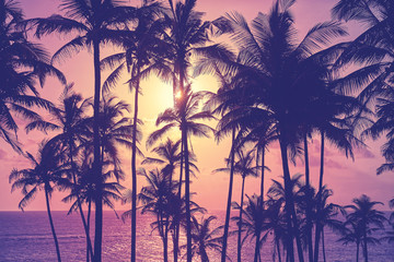 Foto op Canvas Palm boom Coconut palm trees silhouettes at sunset, color toning applied, Sri Lanka.