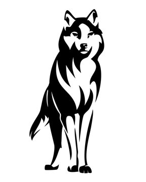 wild wolf standing en face and watching attentively - black and white animal vector design