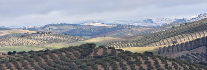 Tuinposter Olijfboom Andalusian rural landscape with olive trees and other growing areas in winter