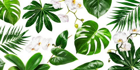 White orchid flowers and tropical green leaves background
