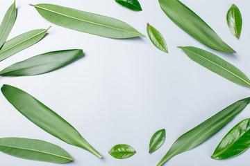 background of fresh green leaves, flatlay