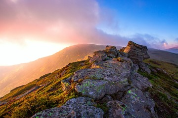 amazing nature landscape, morning sunrise on peak of mountain, scenic nature image of stones and slope in blooming pink summer flowers, blossom floral background, Europe, Ukraine, Carpathians