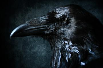 close up shot of a raven head