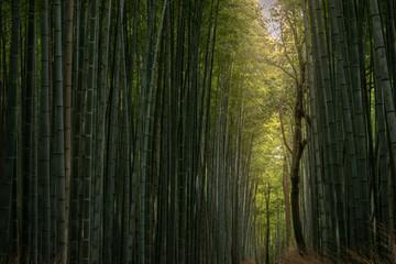 Poster Bambou Bamboo forest in Arashiyama, Kyoto, Japan