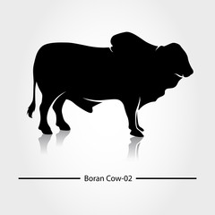 Boran Cow with black shadow and blank. This silhouette suitable for icon, symbol, businesses, product pic, restaurants serving beef dishes, or can also be used for cow farming business.