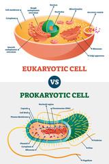 Eukaryotic vs Prokaryotic cells, educational biology vector illustration diagram