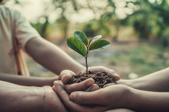 three hand holding tree for planting. concept earth day