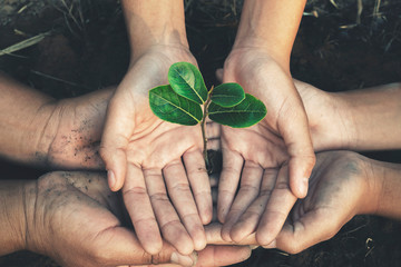 hand protection tree in garden concept save earth Fotomurales