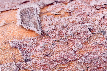 Bright brown tree trunk with ice crystal on the bark on a cold and frosty winter morning in Germany...