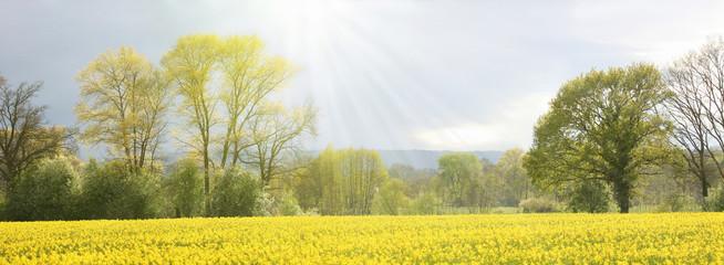 Deurstickers Geel Frühsommerliche Sonne über weiter Landschaft, Panorama