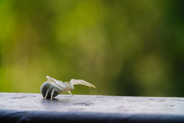 White crab spider crawls and waits for prey, prepares for attack and hides. macro photo