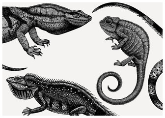 Hand sketched reptiles design. Exotic animal background. Vintage realistic lizards - chameleon, iguana, Komodo dragon frame template. Perfect for banner, flyer, greeting cards, invitations. Wall mural