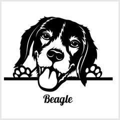 dog head, Beagle breed, black and white illustration