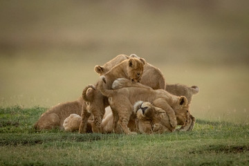 In de dag Afrika Lioness lies on savannah covered in cubs