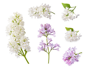 Wall Murals Lilac Set of blooming lilac. Branches of lilac flowers isolated on white background.