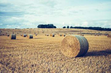 Ingelijste posters Cultuur Wide field with straw bales