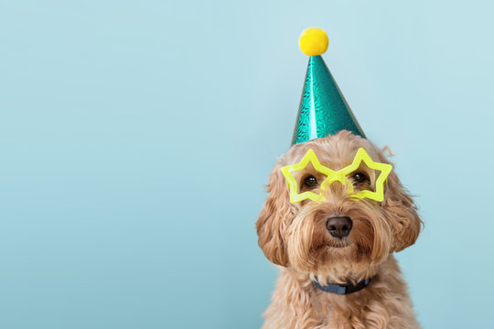 Cute dog wearing party hat and glasses