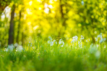 Keuken foto achterwand Geel Sunset meadow flowers in a forest field. Peaceful scenery, warm colors, bright rays over high grass. Forest ground nature landscape background