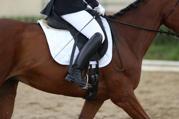 Foto op Plexiglas Dressage horse under saddle on equestrian event summertime
