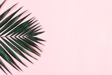 Summer modern composition. Tropical green leaves of palm tree on pastel pink background. Flat lay, top view, copy space Wall mural