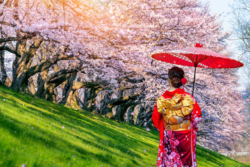 Wall Mural - Asian woman wearing japanese traditional kimono and cherry blossom in spring, Japan.