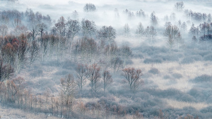 Winter landscape, the misty forest at sunrise