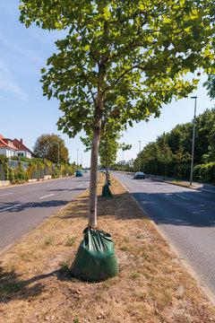 Bei großer Hitze werden die Bäume durch solche Säcke mit Löchern bewässert