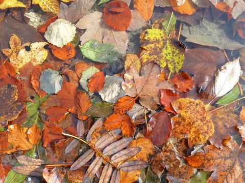 Herbstlaub im Alpsee